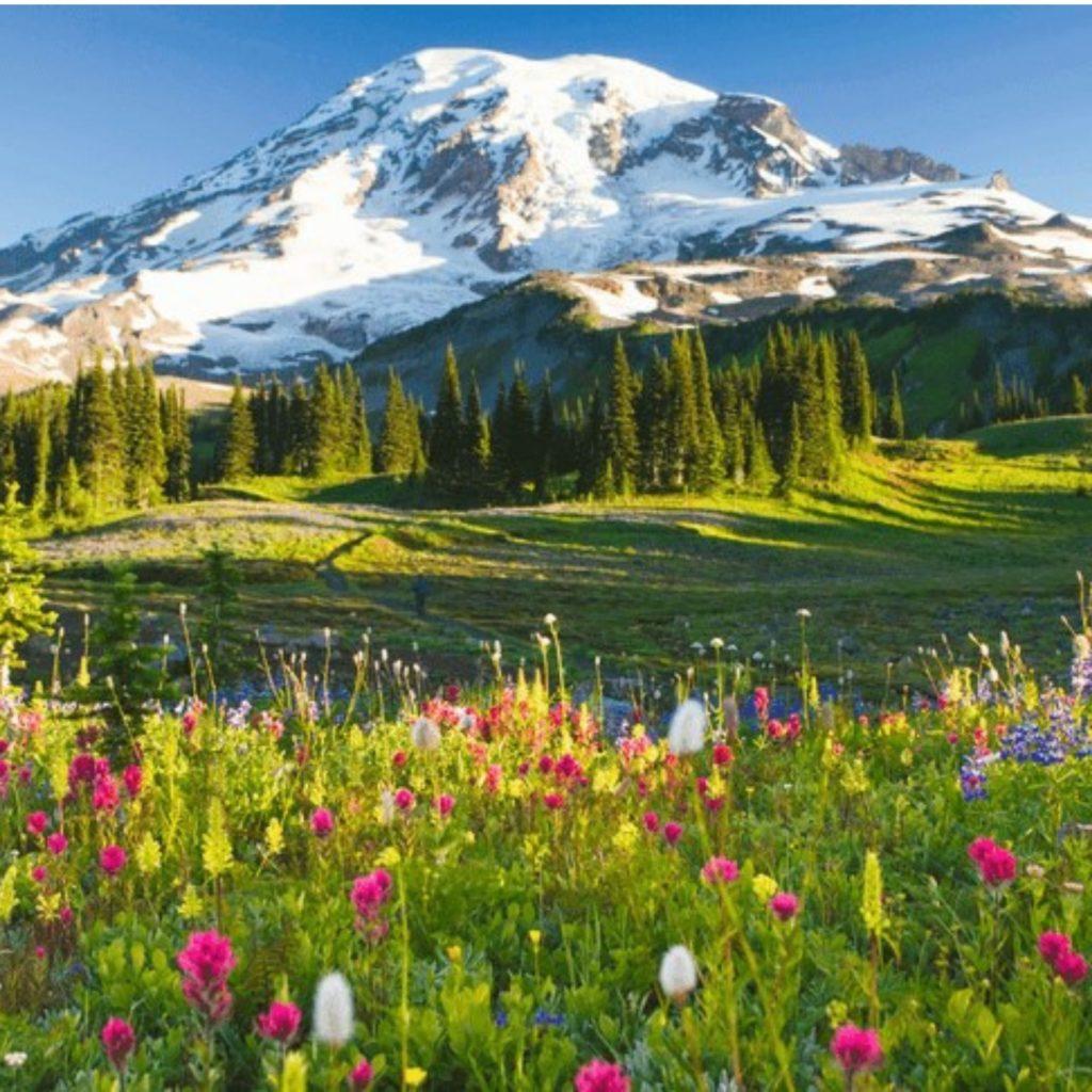 Mount Rainier and wildflowers in Washington, vision